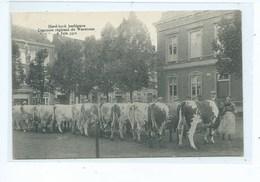 WAREMME - Herd-Book Hesbignon - Concours Régional  Du  5 Juin 1912 - Waremme