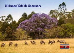 Swaziland Eswatini Mlilwane Wildlife Sanctuary New Postcard Swasiland AK - Swaziland