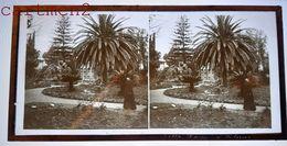 PALERMO PALERME VILLA SICILIA SICILE 1880 FOTO STEREO PHOTOGRAPHIE STEREOSCOPIQUE PLAQUE DE VERRE ITALIE ITALIA - Palermo
