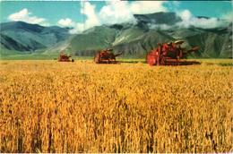 Tibet - Phampo State Farm - Récolteuse Mécanique - Mechanical Harvester - Tractor Tracteur - Tíbet