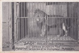 """PS / CIRQUE ."""" SADI """" Lion Du Transwaal Qui Blessa Plusieurs Fois MARTHA La Corse Et Le Dompteur MARCEL - Circus"""