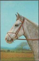 The Grey Horse, C.1970 - Salmon Postcard - Horses