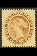 1894  12c Deep Brown, SG 61, Very Fine Mint. For More Images, Please Visit Http://www.sandafayre.com/itemdetails.aspx?s= - Newfoundland And Labrador