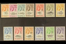 1961  Marine Life (South African Currency) Complete Definitive Set, SG 42/54, Never Hinged Mint. (13 Stamps) For More Im - Tristan Da Cunha