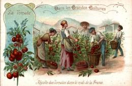 CHROMO CH. LEBORGNE BRUXELLES DANS LES GRANDES CULTURES  LA TOMATE RECOLTE DE TOMATES DANS LE MIDI DE LA FRANCE - Trade Cards