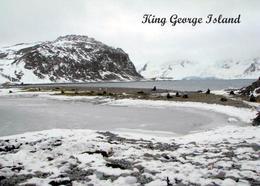 Antarctica King George Island New Postcard Antarktis AK - Sonstige