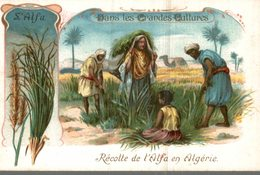 CHROMO  DANS LES GRANDES CULTURES  L'ALFA  RECOLTE DE L'ALFA EN ALGERIE - Chromos