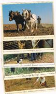 Lot De 7 Cartes Postales - Moissonneurs,hersage,boulanger, Maréchal-ferrant,ferrage Des Boeufs,maquignon 26 - Landbouwers