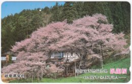 JAPAN K-010 Magnetic NTT [110-011] - Plant, Tree - Used - Japan