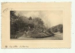 Coq S/mer - Le Petit Bois  ( 2 Scans) - De Haan