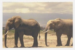 AI39 Animals - African Elephant - Elephants