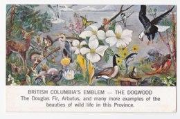 AK91 British Columbia's Emblem, The Dogwood By Isabel Hobbs - British Columbia