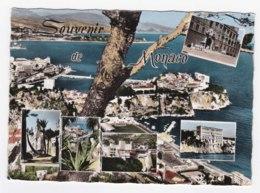 AK91 Monaco Multiview - Monaco
