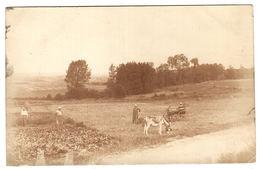 AGRICULTURE - CARTE PHOTO - PHOTO CARD - PAYSANS AU TRAVAIL - Cultures