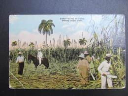AK CUBA Sugar Cane Ca.1910  // D*39074 - Kuba