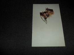 Illustrateur ( 1046 )  Pas De Signature -  Cheval  Paard - Illustrateurs & Photographes