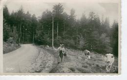 SAINT IGNY DE VERS - Troupeau Vers La Route D'Ajoux- Bon état - Autres Communes
