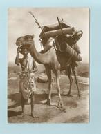 Erythree Eritrea   Cammelliere Bileno  Chamelier - Eritrea