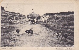 AK Rumänische Landschaft - Vedere La Tară - Ochsengespann Truthähne - Feldpost 1917  (41975) - Rumänien