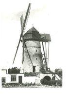 D084 - Denderwindeke Ter Zeven Wegen - Molen - Moulin - Mill - Mühle - Other