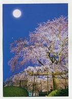 JAPAN - AK 354463 Kyoto - Maruyama Park - Kyoto