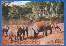 Kenia; Kenya; Elephants; 1960 Kenya Uganda Tanganyika - Kenia