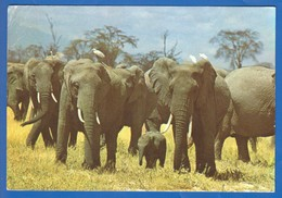 Kenia; Kenya; Elephants - Kenia