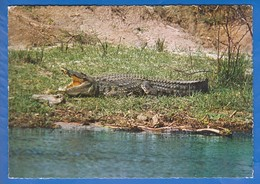 Kenia; Kenya; Crocodile - Kenia