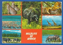 Kenia; Kenya; Wildlife Of Africa - Kenia