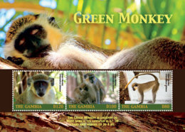 Gambia 2018  Fauna  Green Monkey  I201901 - Gambia (1965-...)