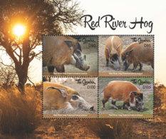 Gambia 2018  Fauna  Red River  Hog  I201901 - Gambia (1965-...)