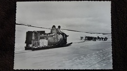 CPSM ARTIC BAY TRANSPORT DE PROVISIONS PAR  TRAINE A CHIENS C HARRINGTON  ARCTIQUE - Postcards