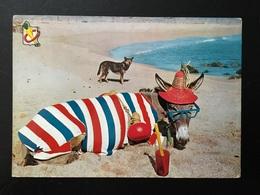 Animal Burro - Burros