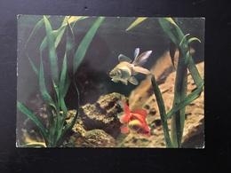 Animal Pez - Pescados Y Crustáceos