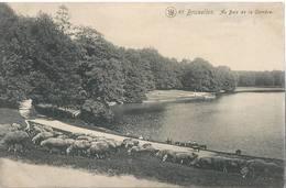 Bruxelles - Au Bois De La Cambre - HP1682 - Foreste, Parchi, Giardini