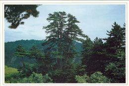 1 AK China * Chinese Pine In Mount Lingkong * - China