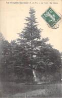 ARBRE Tree Bome - 77 - LA CHAPELLE GAUTHIER : Le Cèdre - CPA - Boom Albero árbol CEDRE Cedar Ceder Cedro Cedr - Bäume