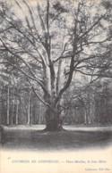 ARBRE Tree Bome - 60 - Environs De COMPIEGNE : Le GROS HETRE - Vieux Moulins - CPA - Boom Albero árbol - Oise - Bäume