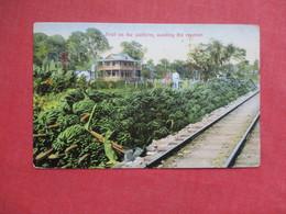 Fruit On Platform  Costa Rica    Stamp & Cancel     Ref 3425 - Costa Rica