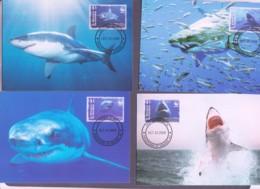 WWF - ST VINCENT & GRENS - 2006 -  WWF  SHARKS   SET  OF 4 MAXI CARDS, - Maximum Cards