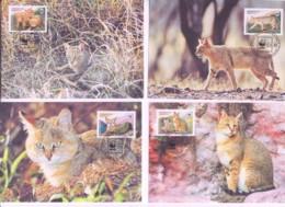 WWF - TAJIKISTAN  - 1994  -  2002 - WWF - REED CAT  SET  OF 4 MAXI CARDS, - Cartoline Maximum