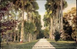 Cp Peradeniya Ceylon Sri Lanka, Talipot Palm Avenue In The Royal Botanic Garden - Sri Lanka (Ceylon)