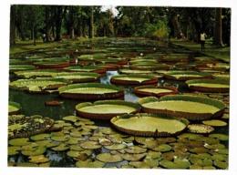 L'Ile Maurice - Jardin De Pamplemousses (nénuphars Géants) Circulé, Timbre, Mascarene Bul-bul, Merle - Mauritius