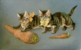 CATS - 2 KITTENS WITH CARROT 1908 C529 - Katten