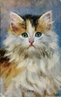 CATS - PRIM By ROSA BEBB 1925 C503 - Chats