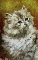 CATS - SYLVIA By ROSA BEBB 1918 C505 - Katten