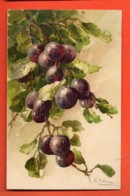 EPC-28 Catharina Klein Illustrator Grappe De Raisins Rouges Grape Circulé En 1915 - Klein, Catharina