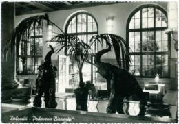 PEDAVENA  BELLUNO  Birreria  Salone Con Elefanti - Belluno
