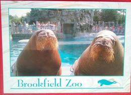Brownfield Zoo  Walrus - Chicago