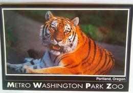 Metro Washington Park Zoo Tiger - Portland